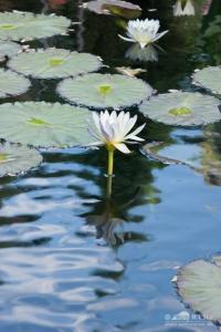 20140713_botanicgarden_9694_small