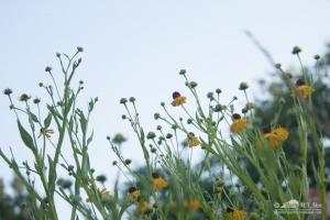 20140713_botanicgarden_9804_small