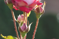 20140713_botanicgarden_9778_small
