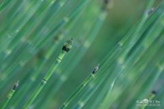20140713_botanicgarden_9840_small