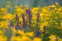 20140713_botanicgarden_9871_small