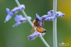 20140713_botanicgarden_9906_small