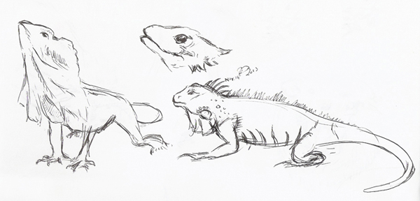 Lizard Sketches