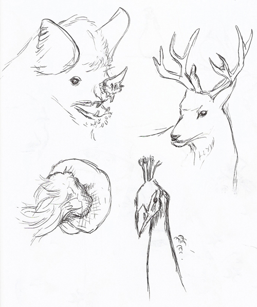 Animal Sketches: Bat, deer, jellyfish, peacock