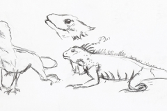 20131104_lizardsketches_001