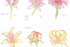 2014_colorpencil_flowers_001
