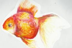 goldfish_01